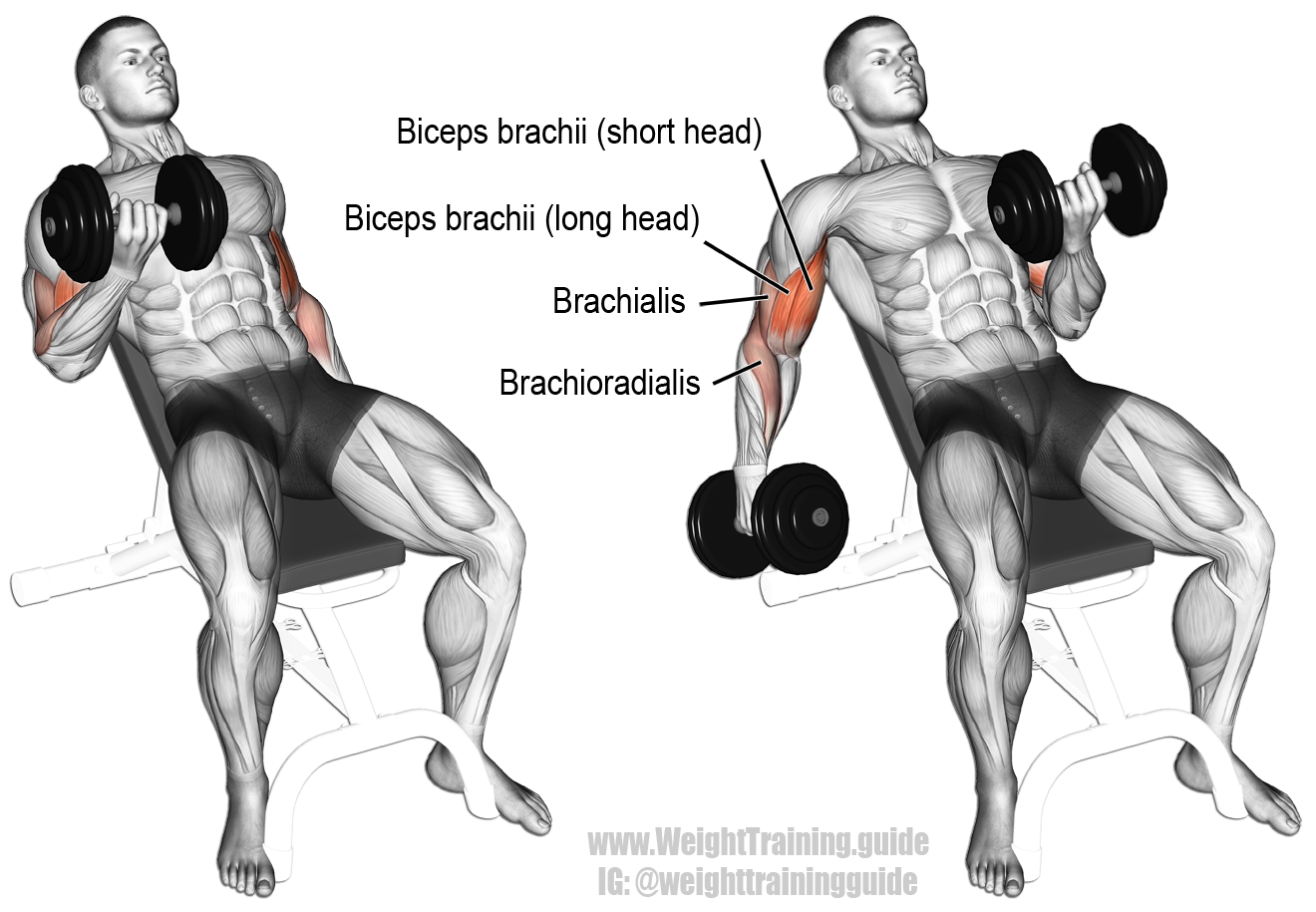 Arm Workouts to Build Muscle and Functional Strength for CrossFit | Page 2  of 7 | BOXROX